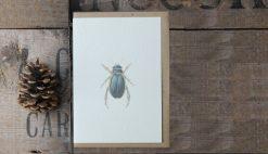 Diving Beetle A6 greetings card with Kraft envelope