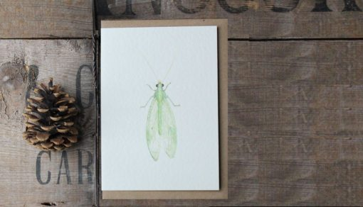 Lacewing A6 greetings card with Kraft envelope