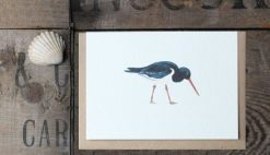 Oystercatcher A6 greetings card with Kraft envelope