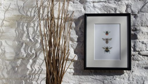 3 BEES framed Claire Vaughan Designs