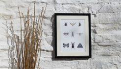 Nine Insects large framed botanic art print