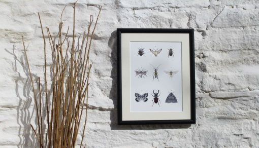 9 INSECT framed Claire Vaughan Designs