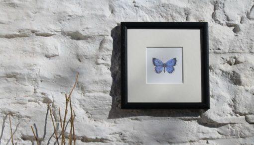 Holly Blue square framed botanic art print