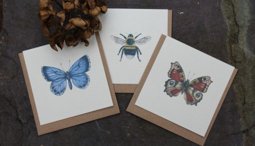 Insect Designs notecards 6 pack