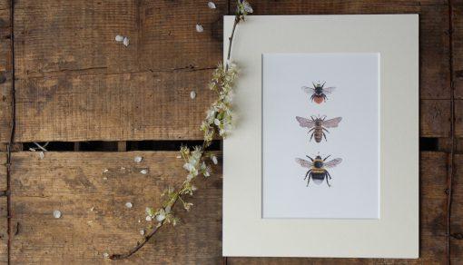 Three Bees unframed botanic art print
