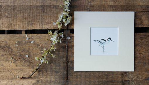 Avocet unframed seabird print