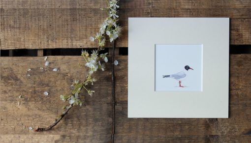 Gull unframed coastal print