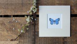 Holly Blue unframed botanic art print