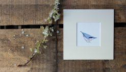 Nuthatch unframed garden bird print