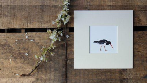 Oystercatcher unframed seabird print