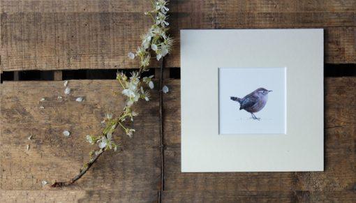 Wren unframed garden bird print