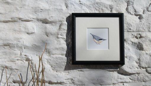 Nuthatch square framed garden bird print