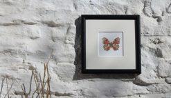 Peacock Butterfly square framed botanic art print