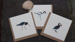Seabirds Designs notecards 6 pack