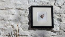 Wren square framed garden bird print